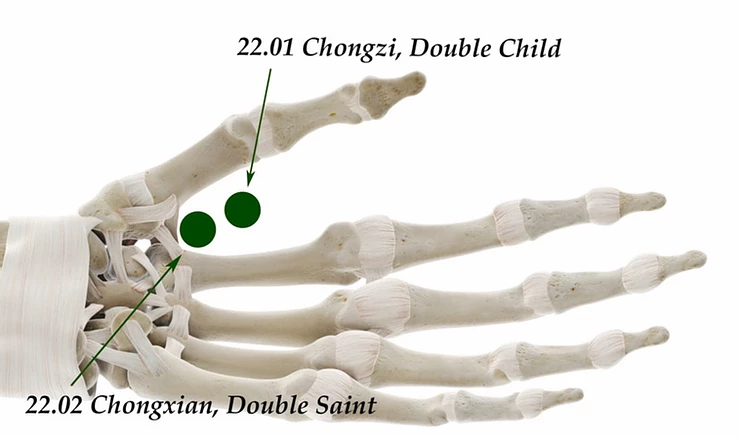 Skeleton hand showing acupuncture pressure point 22.01 and 22.02